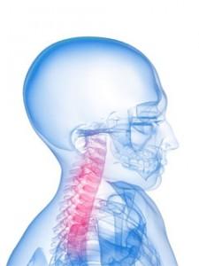 頸部イメージ